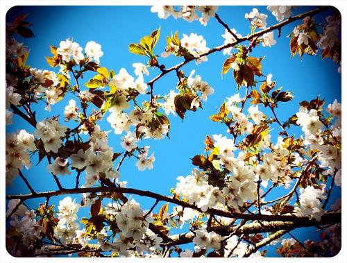 Blossom by Gitte Morten