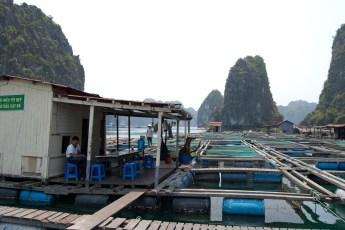 Besuch Pangasius Fischzucht 6