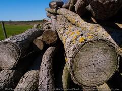 2012-04-05-Marfield-Wetlands-P4050008