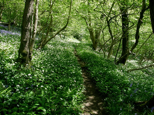 Path through the Ramsons