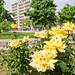 Frosinone in fiore