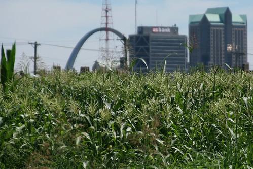 Cornfield in North St. Louis East of Jefferson