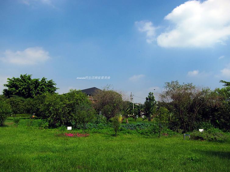大樹舊鐵橋生態公園 (13)