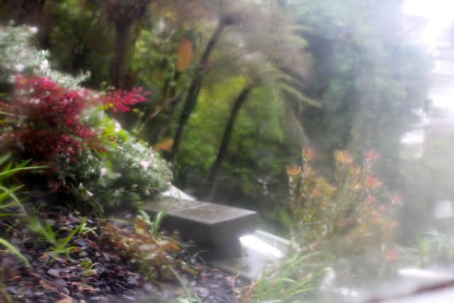 Saturday: so much rain it looks like impressionism