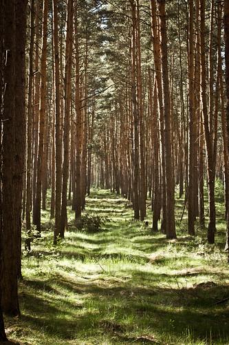 Forstweg II