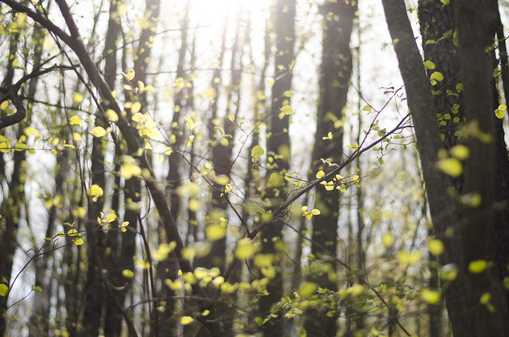 in the woods // spring