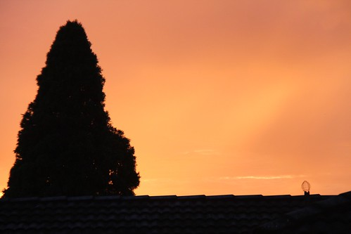 Out my window 15th June 2012 by therainbowfish
