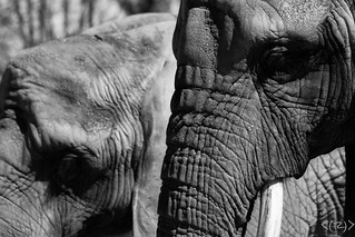 Zoo in black and white
