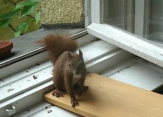 Eichhörnchen zähmen 6