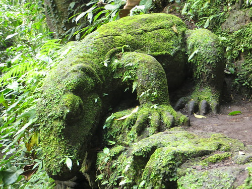 moss covered lizard