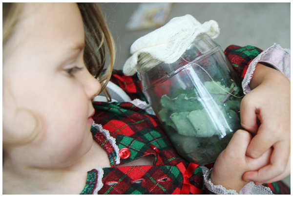 Observing the Cabbage White Butterfly Life Cycle with Kids
