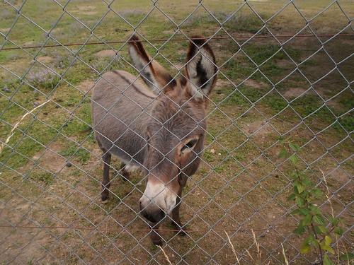 Sad mule