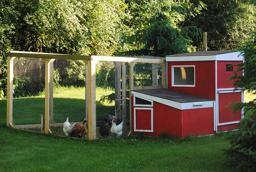 Chicken Shed Extension