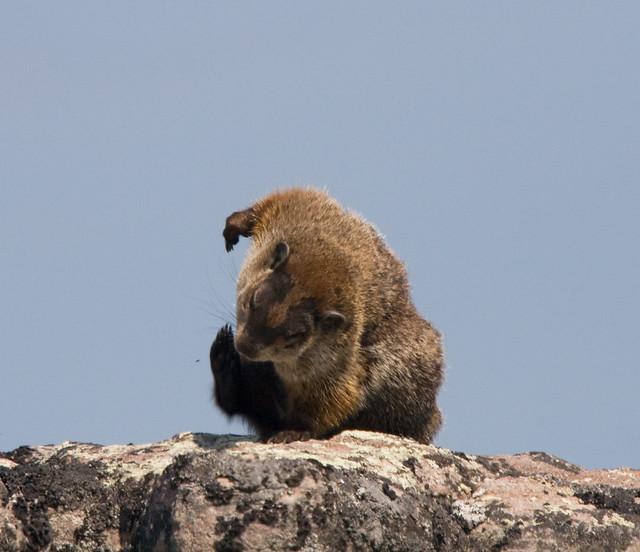groundhog day yoga