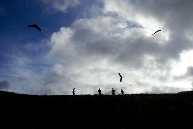 Flying Zagis