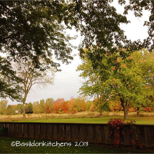 Oct 5 - the sky {it's overcast today however the fall colors are pretty} #photoaday #sky #overcast #fall #color #autumn #fence #trees