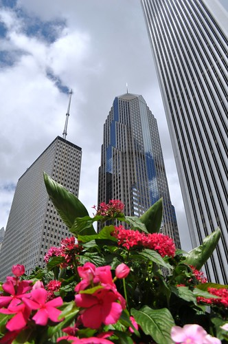 Loved Walking through Downtown Chicago and Enjoying the Architecture