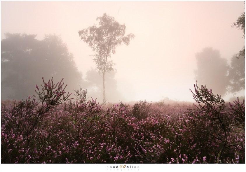 Twee ochtenden op de Strabrechtse Heide