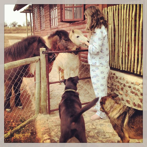 Lindsey feeding the dogs
