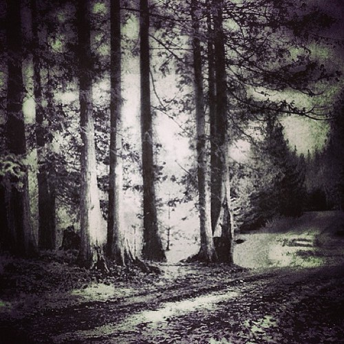 The woods by @MySoDotCom