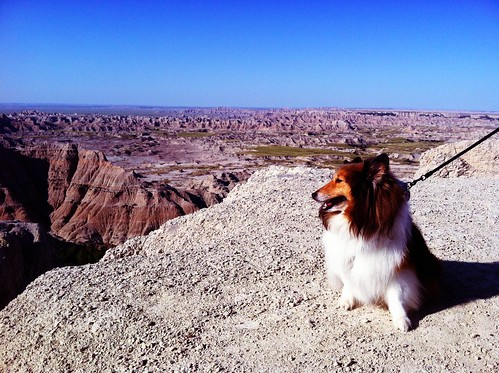 Bailey in the Badlands