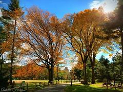 #Autumn  #fall #centralpark #manhattan #newyork