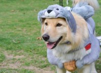 Bartlett Dog Show- Squirrel Costume | Explore Z PHOTOG's ...