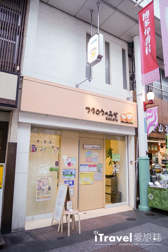 《福冈景点推介》OWL Family 猫头鹰咖啡店:教你在线预订与萌萌小家伙的约会