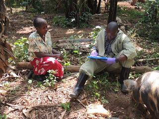 Gathering information about pig keeping in Mukono, Uganda