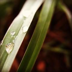 #grass #photoadaymay #olloclipmacro