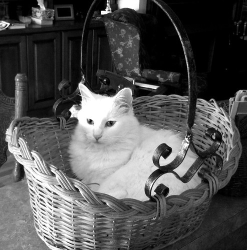 Miss Yo-Yo and her basket by danielrpartain