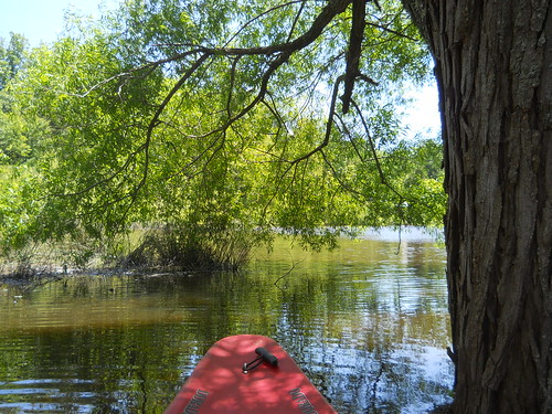 Kayaking on Lake Orange