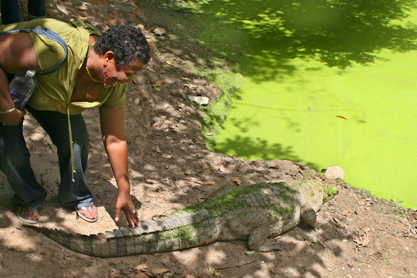 Kachikally Crocoile Pool - one of my top 10 things to do in Gambia on a budget