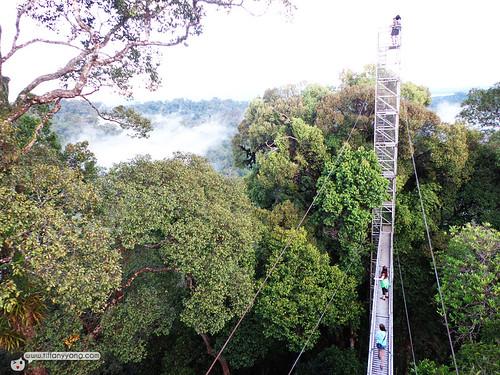 brunei canopy walk
