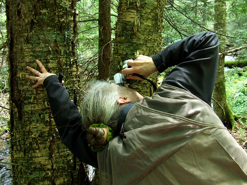 photographing in old-growth forest (Cathedral SP, WV)