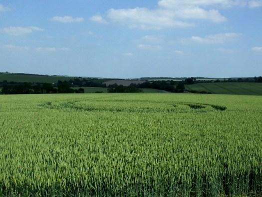 crop circle beside West Kennet Long Barrow