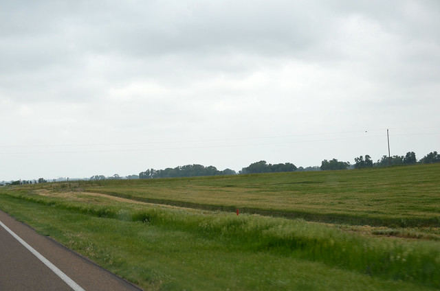 Wheat in Great Bend