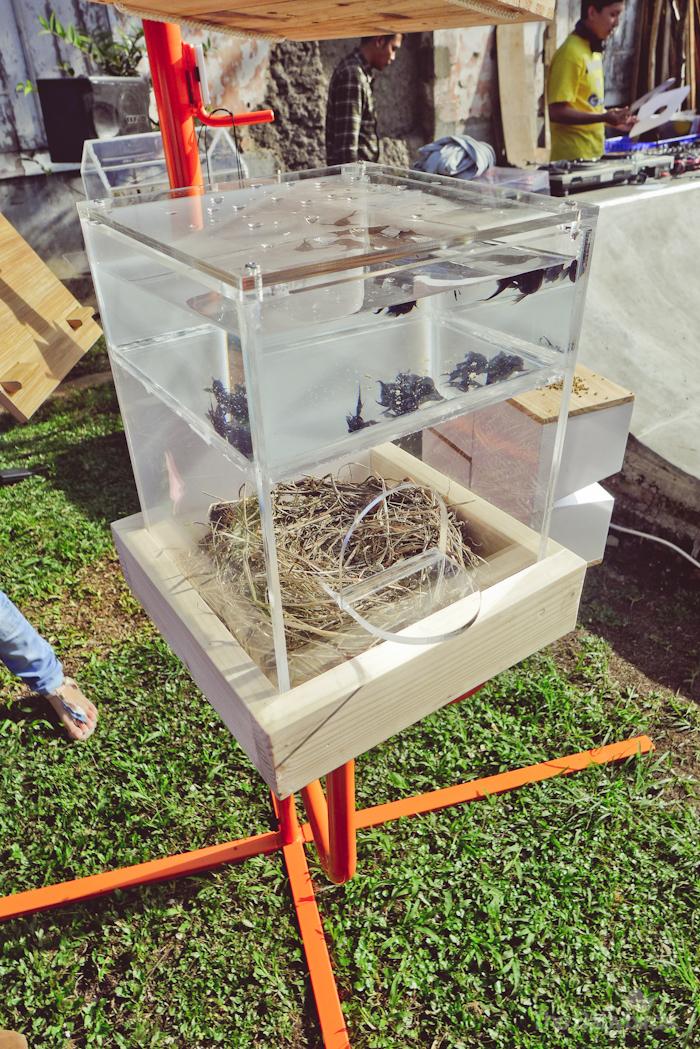 Bird House Project