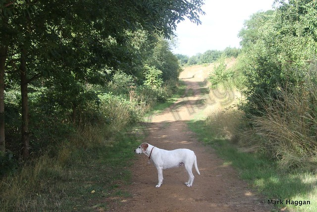 Berta in Harmondsworth Moor