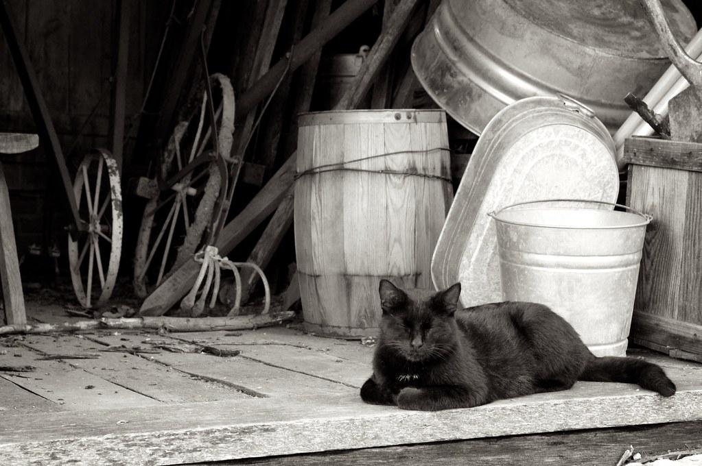 New Cat at the Farm
