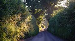 sunrise on a Dorset lane