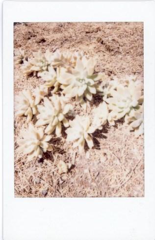 Succulent Cluster