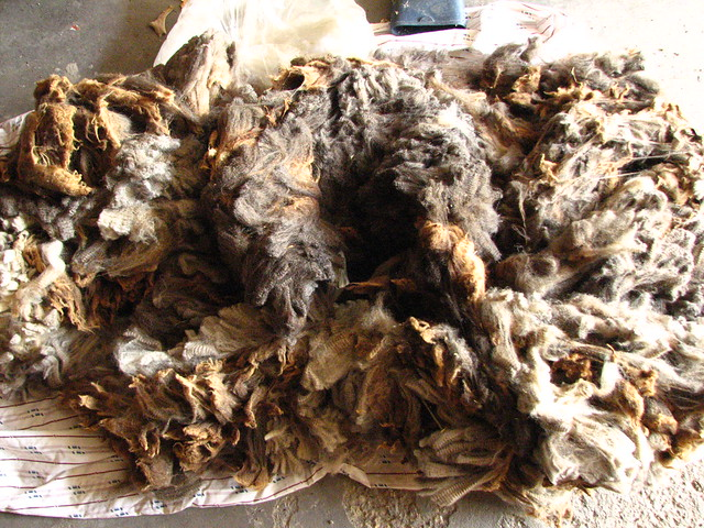 Corriedale Fresian Wool Fleece