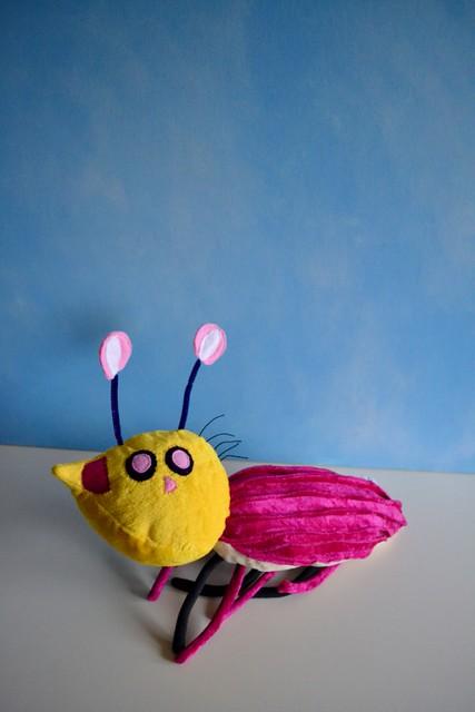 Maja's beetle