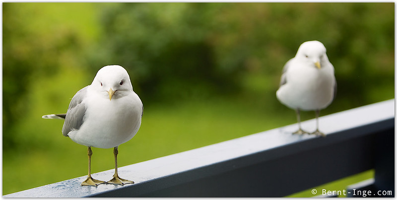 Seagull Brothers