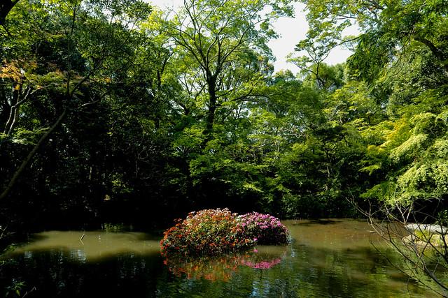 楽寿園 rakujyuen at Mishima