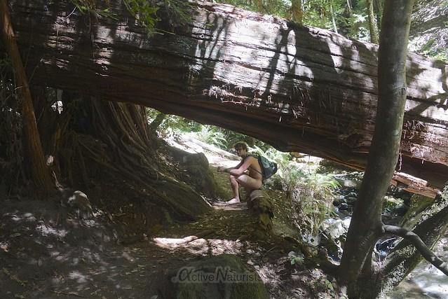 naturist 0008 Big Basin Redwoods, CA, USA