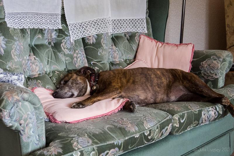 Jez hogs the sofa - again!