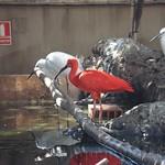 Oceanografic Miguel, aves 04