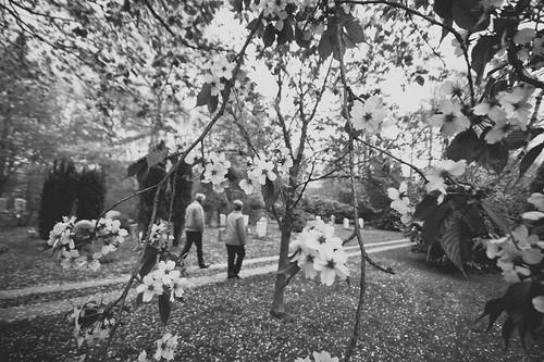 stroll through cherry blossoms